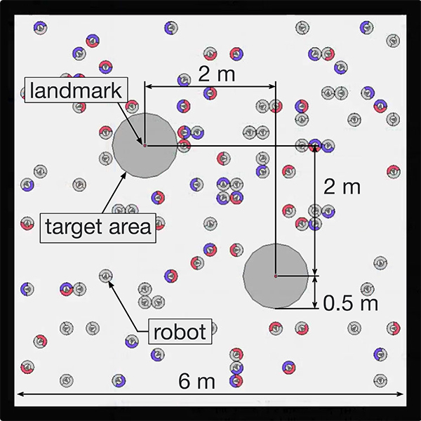 Evolutionary Acquisition of Autonomous Specialization in a Path-Formation Task of a Robotic Swarm