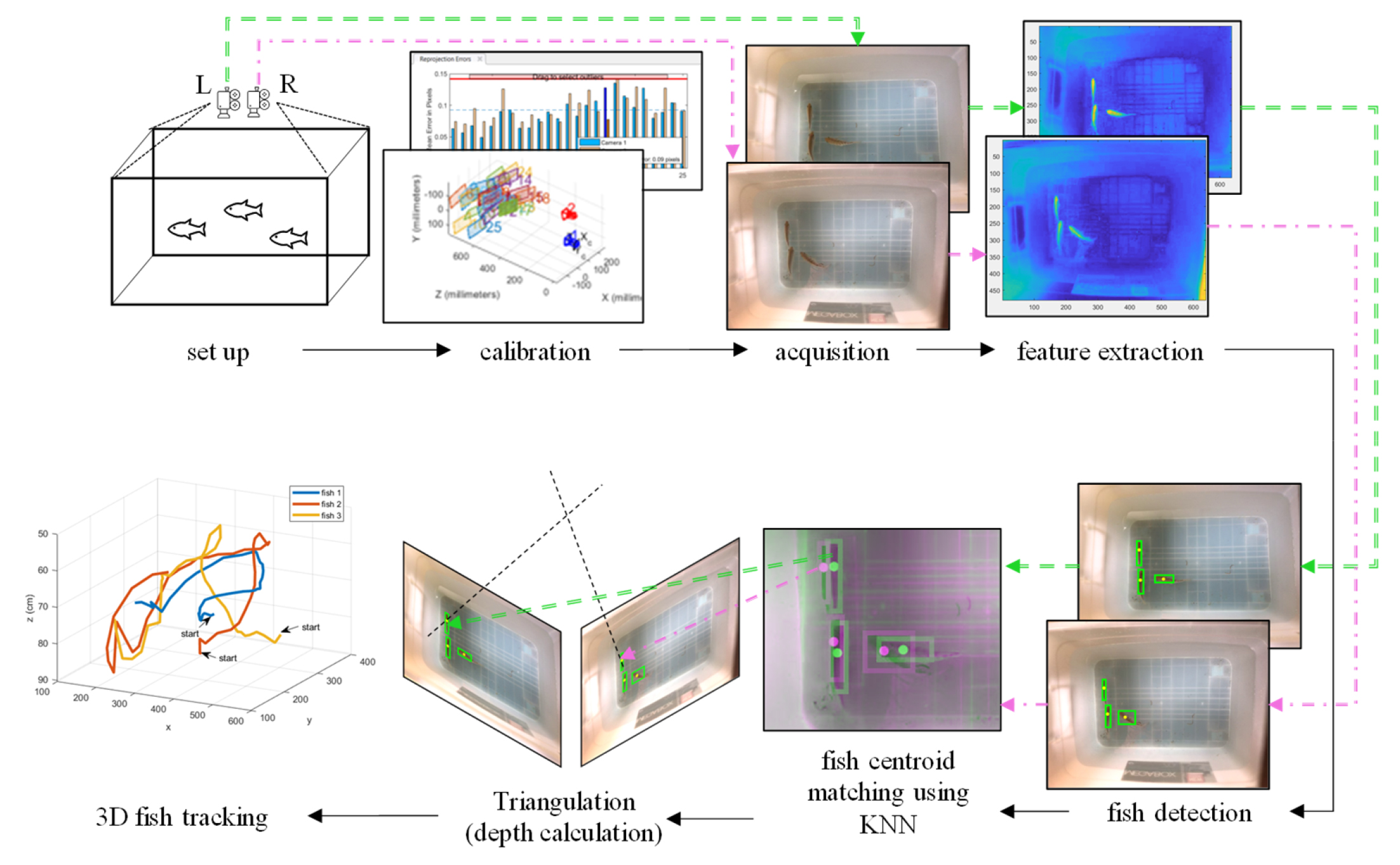 Three-Dimensional Stereo Vision Tracking of Multiple Free-Swimming Fish for Low Frame Rate Video