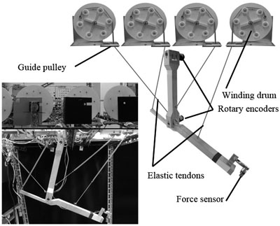 Control of Low-Cost Customizable Robot Arm Actuated by Elastic Tendons