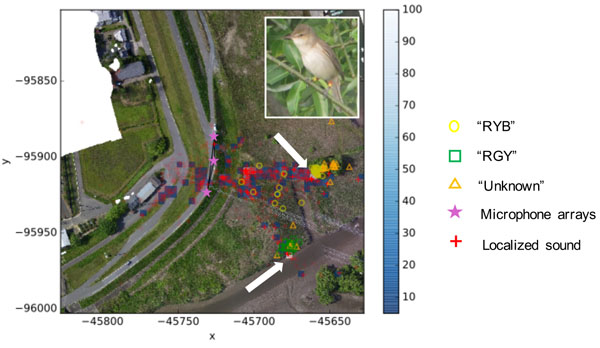 Acoustic Monitoring of the Great Reed Warbler Using Multiple Microphone Arrays and Robot Audition