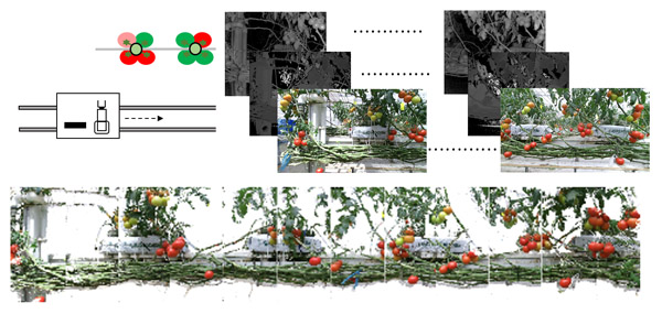 Image Mosaicing Using Multi-Modal Images for Generation of Tomato Growth State Map