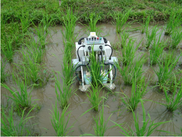 Effect for a Paddy Weeding Robot in Wet Rice Culture