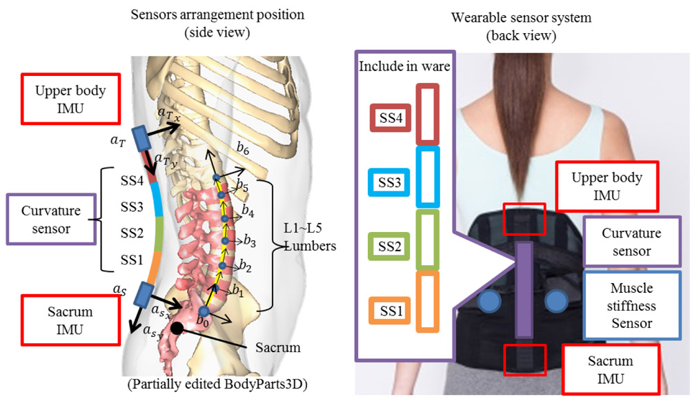 Estimating Lumbar Load During Motion with an Unknown External Load Based on Back Muscle Activity Measured with a Muscle Stiffness Sensor