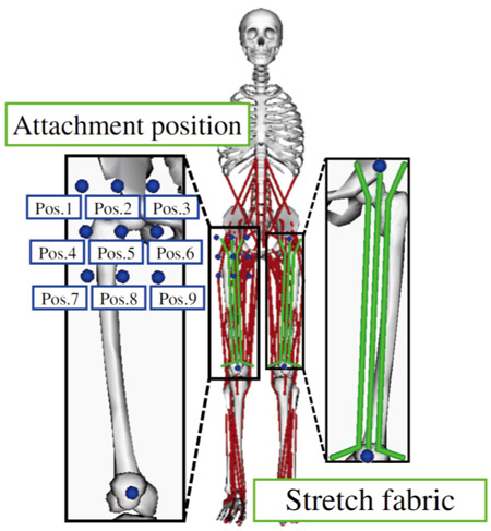 Supporting Effects on Muscles of a Motion Assistive Wear Depending on the Fixture Position