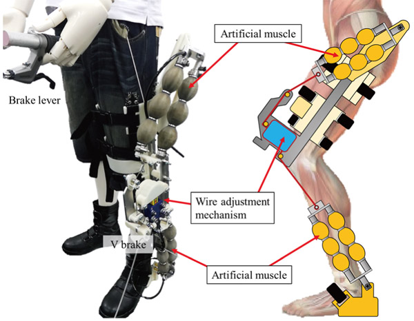 Proposal of Non-Rotating Joint Drive Type Power Assist Suit for Lower Limbs Considering Squat Lifting