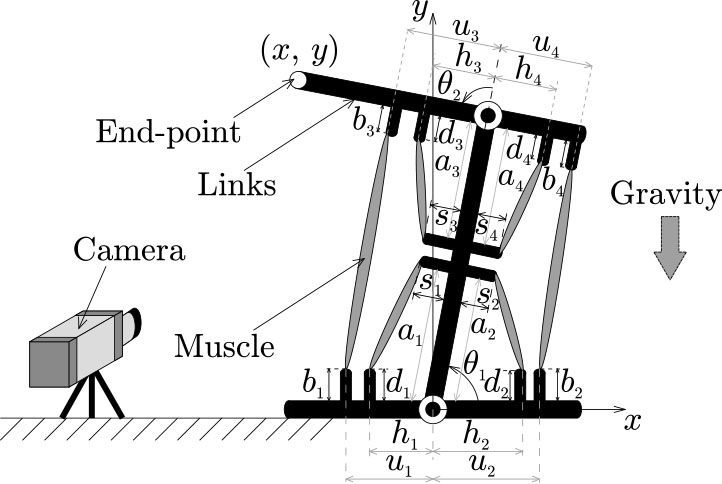 Set-Point Control of a Musculoskeletal System Under Gravity by a Combination of Feed-Forward and Feedback Manners Considering Output Limitation of Muscular Forces