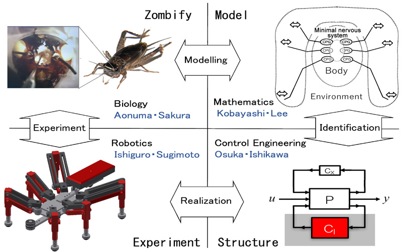 Zombification of Insects as a Model for Searching the Source of Various Behaviors of Living Organisms