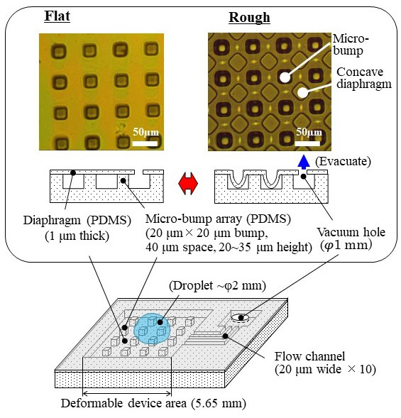 PDMS Soft Skin Device with Deformable Micro-Diaphragm Array Fabricated with Rapid Substrate-Releasing Process