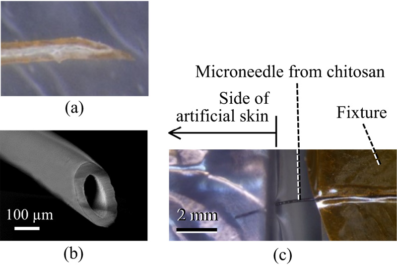 Fabrication and Characterization of a Biodegradable Hollow Microneedle from Chitosan