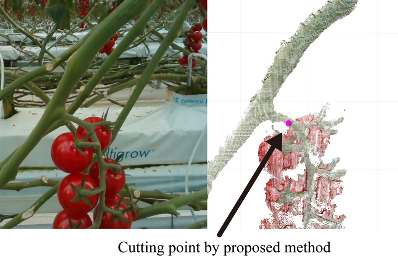 Cutting Point Detection Using a Robot with Point Clouds for Tomato Harvesting
