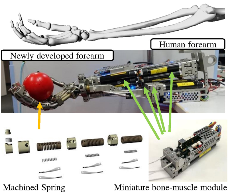 Human Mimetic Forearm and Hand Design with a Radioulnar Joint and Flexible Machined Spring Finger for Human Skillful Motions