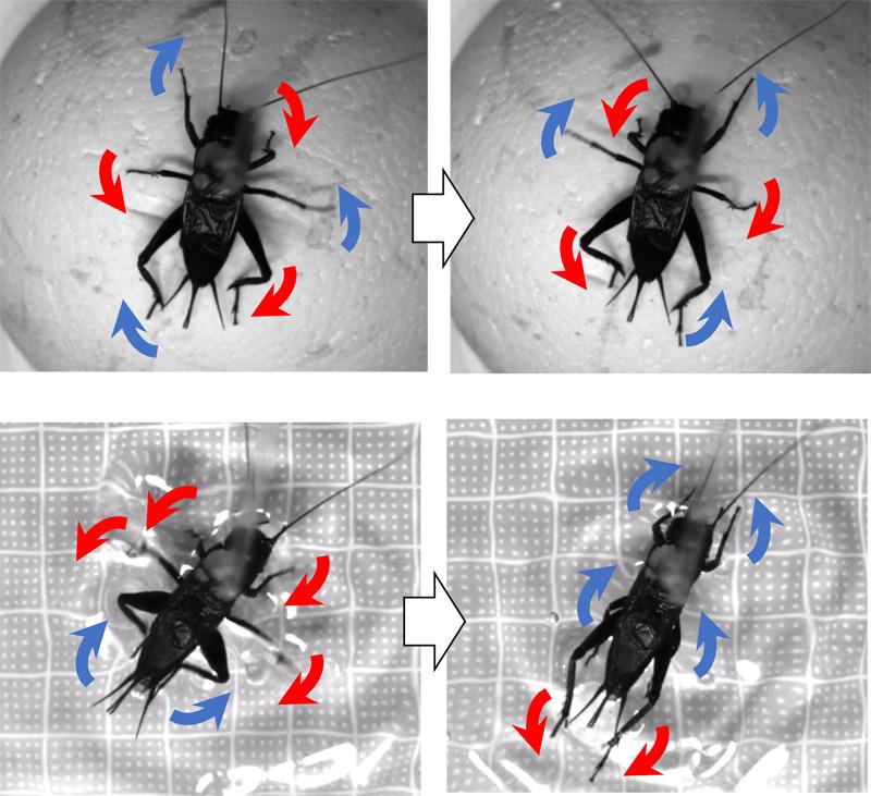 Novel Method for Analyzing Flexible Locomotion Patterns of Animals by Using Polar Histogram
