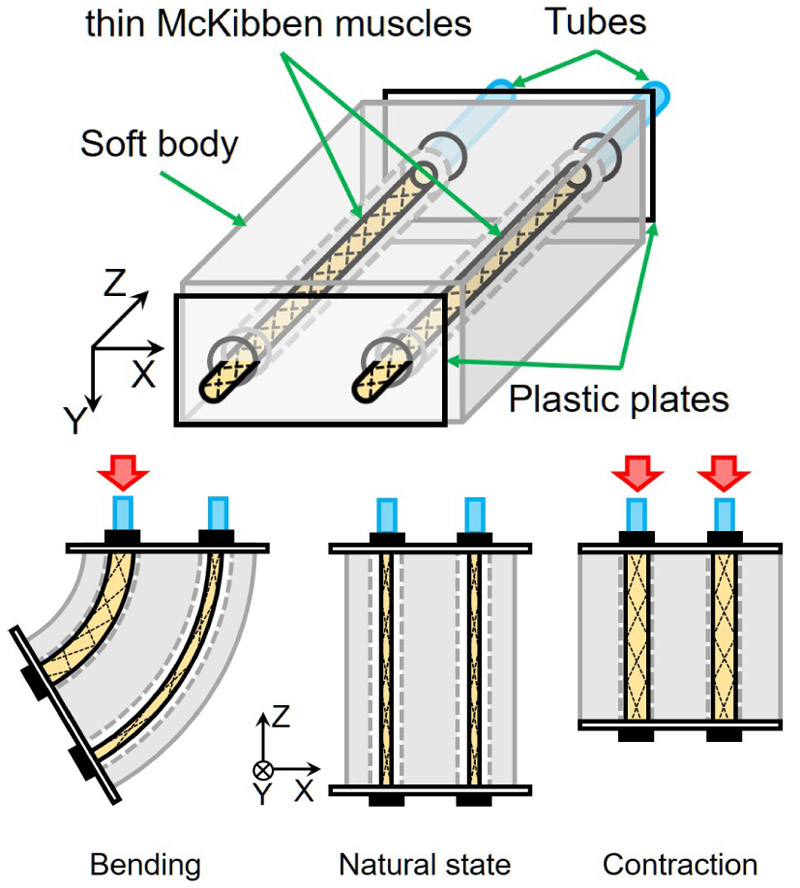 Flexible Pneumatic Bending Actuator for a Robotic Tongue