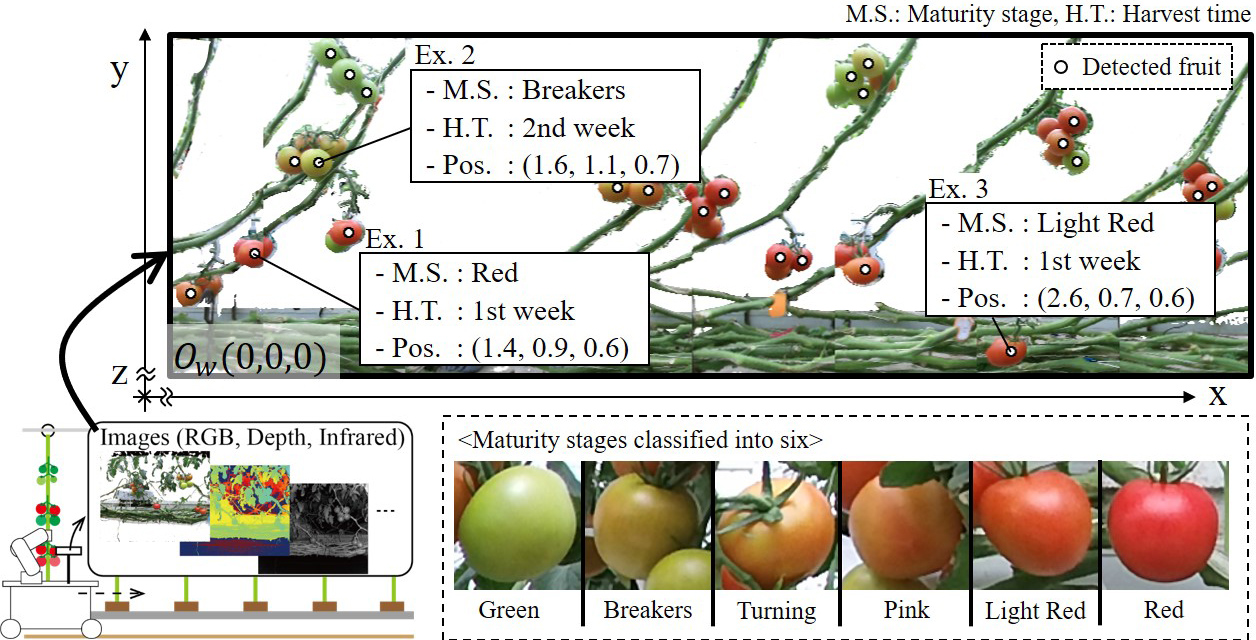 Tomato Growth State Map for the Automation of Monitoring and Harvesting
