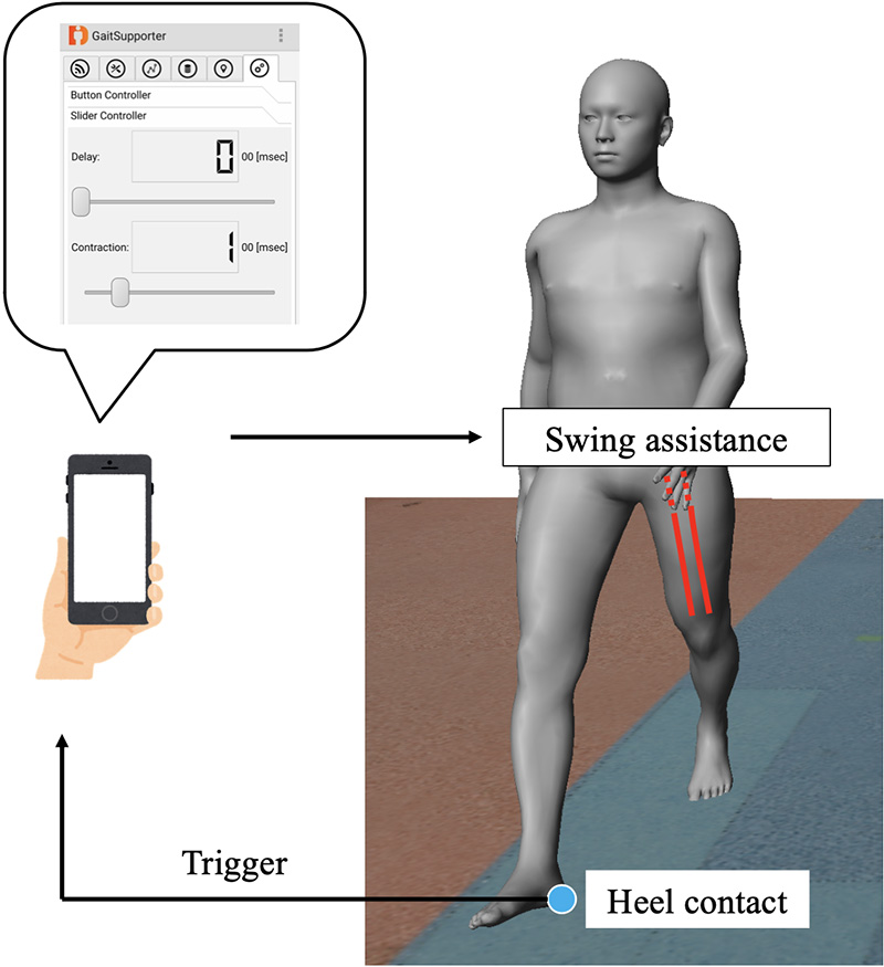 Optimal Swing Support During Walking Using Wireless Pneumatic Artificial Muscle Driver