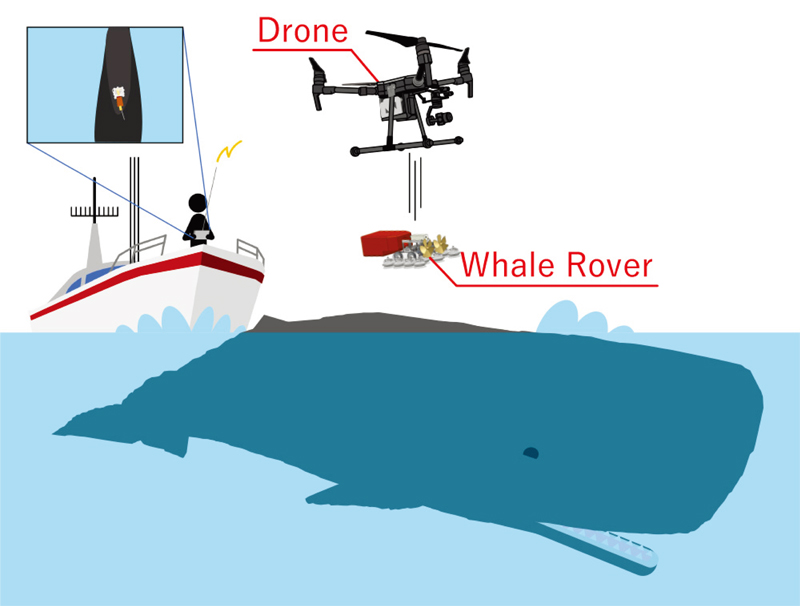 Logger Attaching System for Sperm Whales Using a Drone