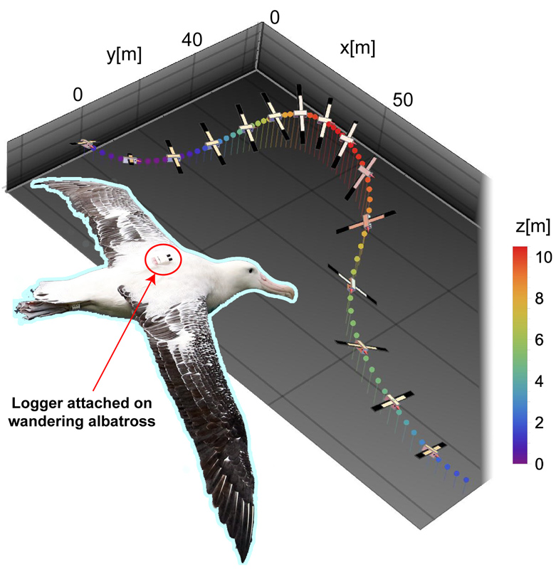 Application of Inertial and GNSS Integrated Navigation to Seabird Biologging