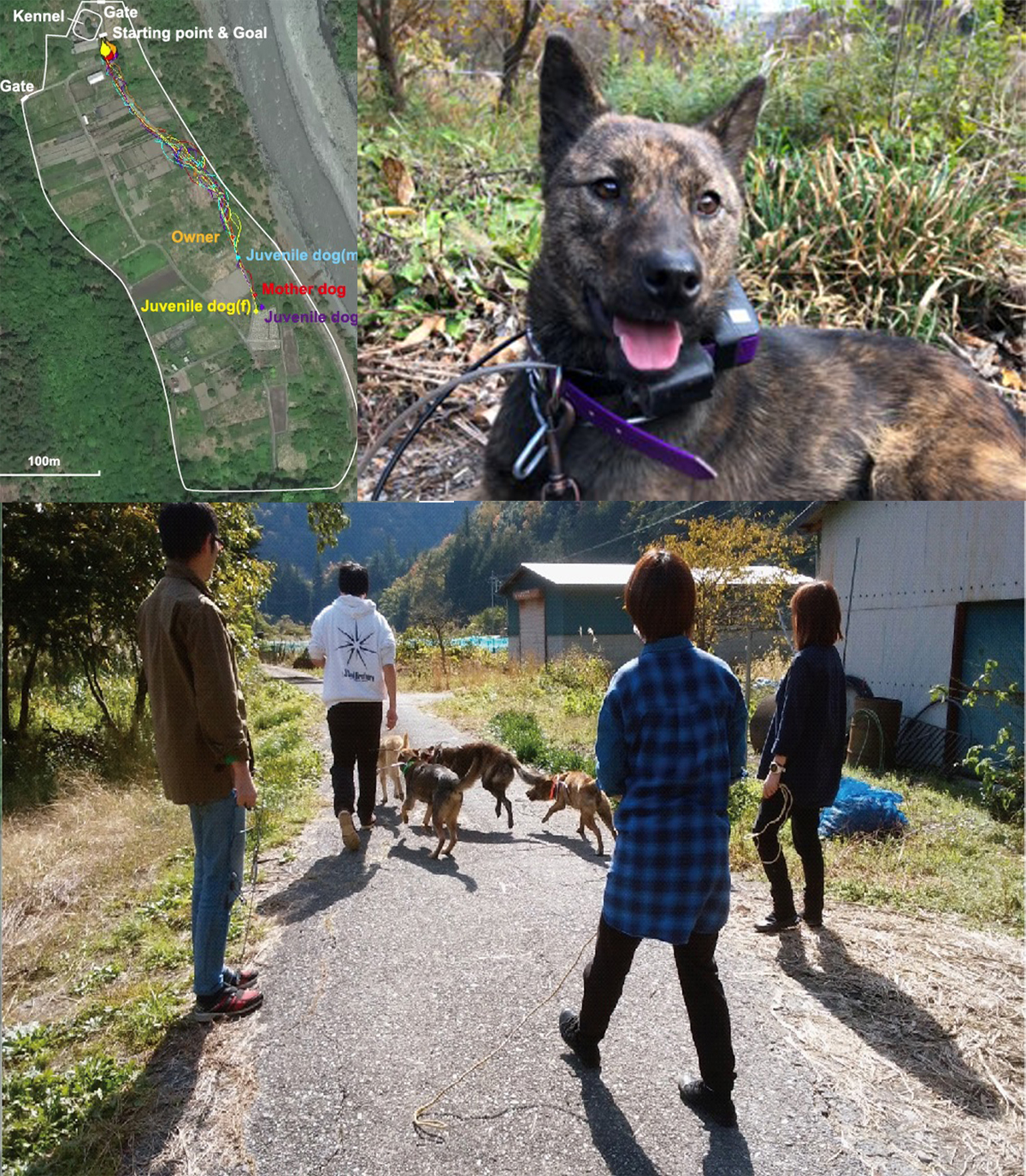 A Pilot Study of the Effects of Human Intervention on Canine Group Movement Behavior